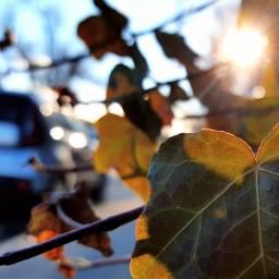 mypic today leaves sun myneighborhood