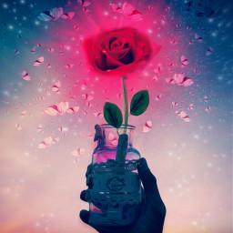 wishjarremix remixit myedit flower Beautiful Butterfly