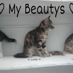 cute cats animalqueen animals photography