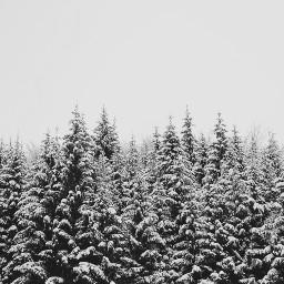 freetoedit photography background nature winter