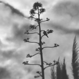 greece nature bnw bnw_captures bnwphotography