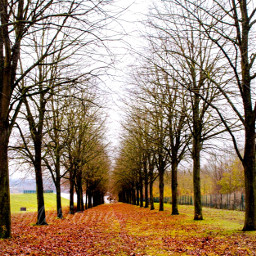 freetoedit landscape autumn🍁 november2017 treebranches