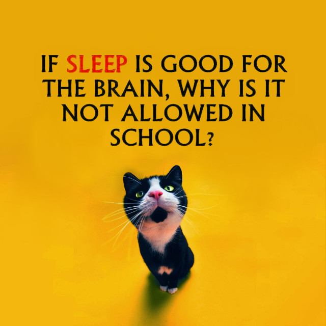 #kittylove #quotes & sayings  #randomthoughts