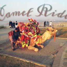 camelride mirpurazadkashmir madeinpakistan ecmytravel mytravel