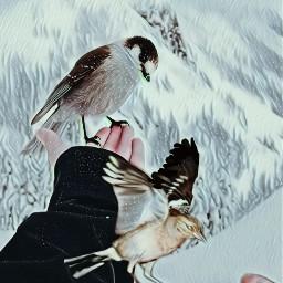 freetoedit birdremix