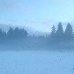 freetoedit blue snow fog trees pcmyview