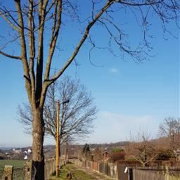 walk gardens trees fences rural