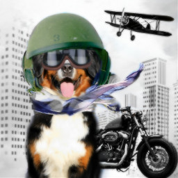 cool dog vipshoutout cute funnyanimals freetoedit