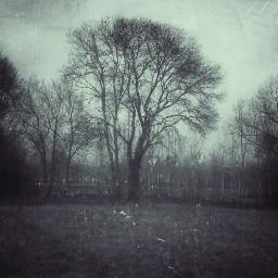 freetoedit field tree flood photography scene