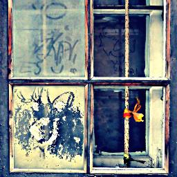 window photography art latvia riga