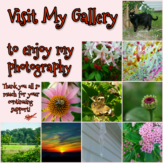Please repost if you love my photography.  😊 Thanks! 💟💗💖 #gallery #mygallery #invitation #invitations #thankyou #photography #photos #myphotos