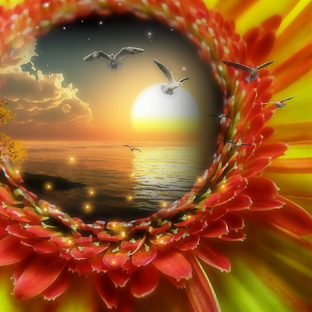 #freetoedit #flower #sunset #fisheyeeffect  #doubleexposure #smartblur #vipbrushtool
