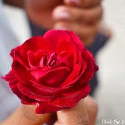 freetoedit rose roseday dslrclick nikon