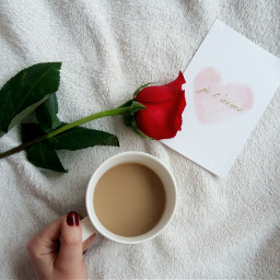 photography flatlay coffeetime coffee instalike picoftheday white seekthesimplicity theeverygirl fromabove pursuewhatislovely flatlaysquad flatlaythenation flatlaystyle flatlayoftheday flatlayforever whywhiteworks whiteaddicted whitearoundus handsinframe rose love follow cute valentinesday freetoedit