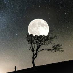 madewithpicsart moon night mood tree