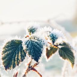 winter frost frostydays winterscenes freetoedit