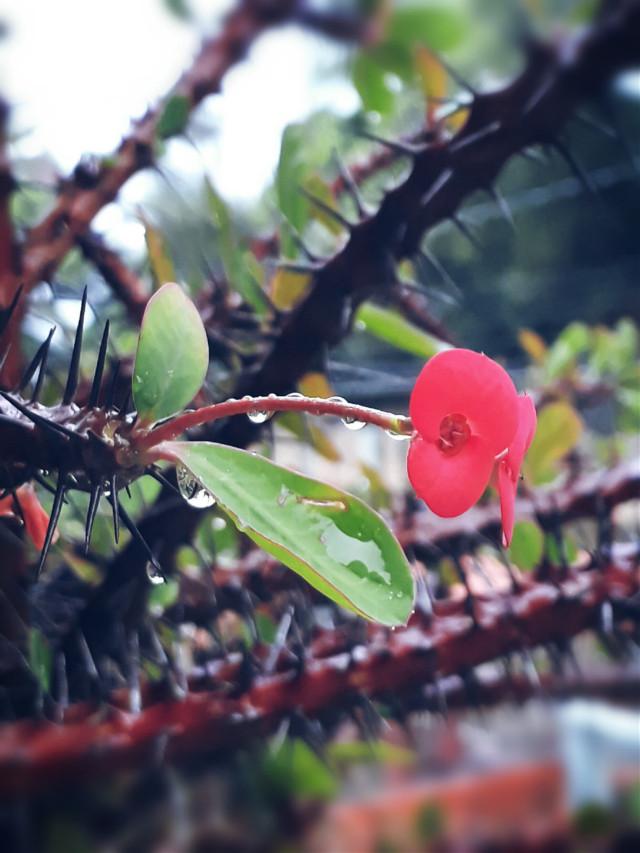 #rainyday #rain #raindrops #flower #tinyflower #minimalism #photography #nature #naturephotography #dodgereffect