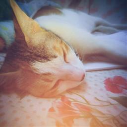 freetoedit animallover cat photography petsandanimals
