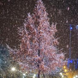 photography myphoto winter snow effect
