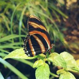 freetoedit life peddles plants inscet