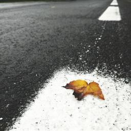 photography road leafs dramaeffect travel freetoedit