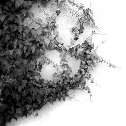 freetoedit editbyme natur shirt blackandwhite remix remixit