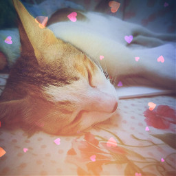 freetoedit cat kitten sticker photoedit