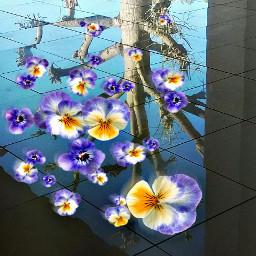 upsidedown tree nature photography clipart
