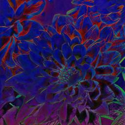 freetoedit flower flowers remixit blue