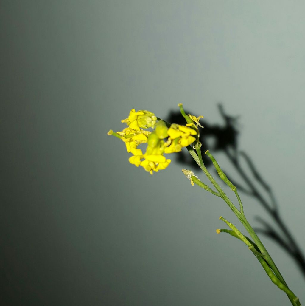 Yellow That Tiny Yellow Flowers Aesthetic Pic My Photo