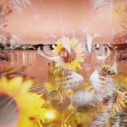 freetoedit catsareadorable freedomofexpression flowerslovers sunflowers🌻💛🌻