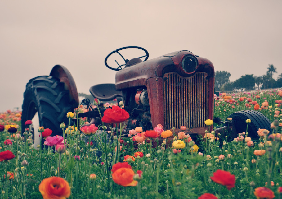 #photography #flowers #colorful #lightcross #lowangle #tractor #flowerfield #carlsbad #california