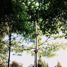 chalange photography photooftheday indonesian treelove pctrees
