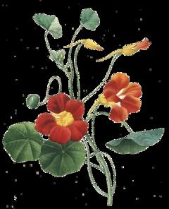 flower ftestickers freetoedit