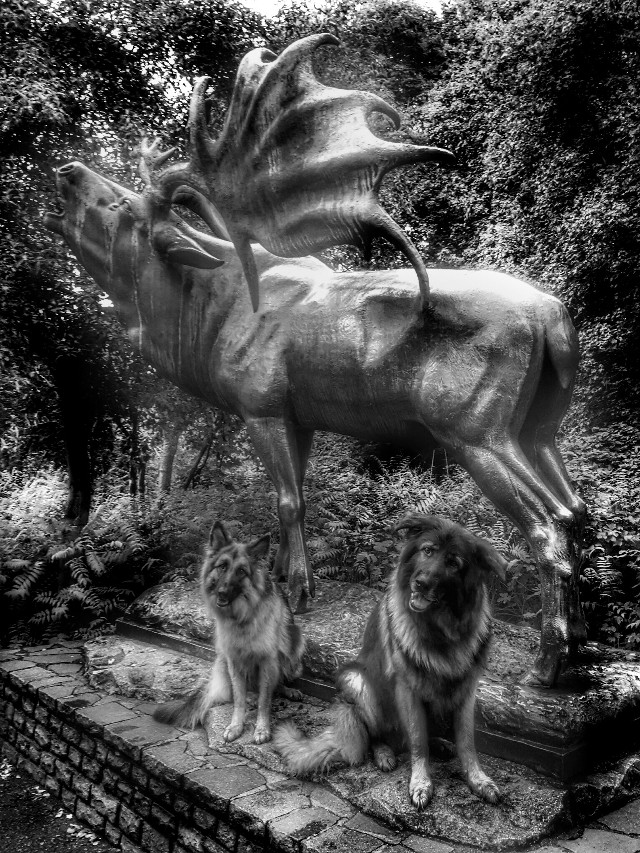 Now I'm going on with my little series Dogs & Statues #myphoto #mydogs #germanshepherds ,,#blackandwhite #statue #pcblackandwhite