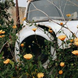 junk car photography nature