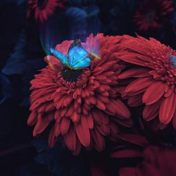 freetoedit butterfly blue bluebutterfly light