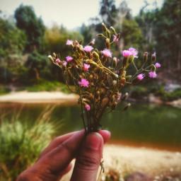 freetoedit smallflower justatry picsart