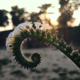 myphotography flower sunset bokeh