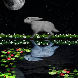 freetoedit ircbunnyrabbit bunnyrabbit rabbit nature