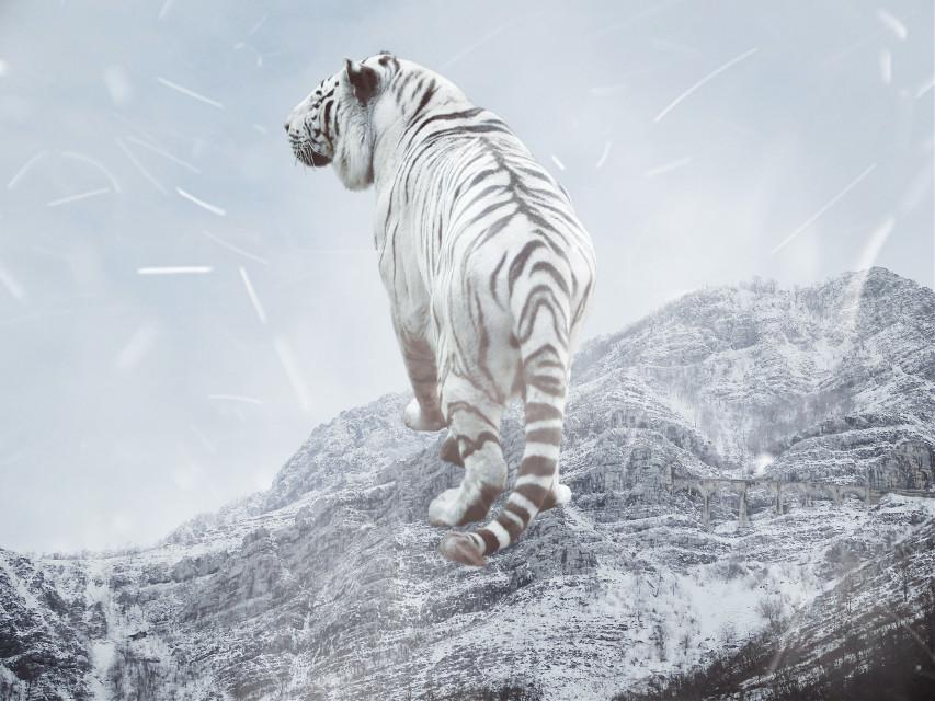 #freetoedit #mountains #snow #nature #tiger #surrealism #picsart #simple #white #fog #sky