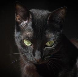 hdrphotography cat catlove catsofpicsart cateyes
