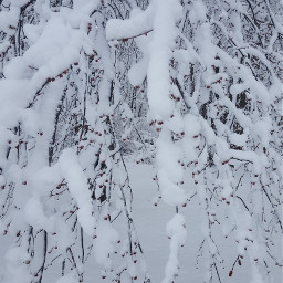 winter wintermorning beautiful tree branches freetoedit