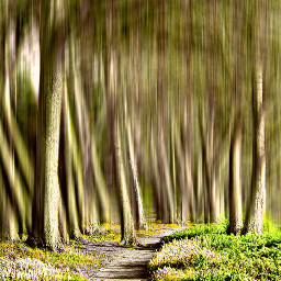 freetoedit trees photography nature landscapes
