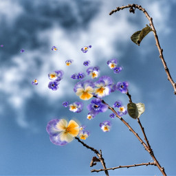 sky blue flowers playwithpicsart edited