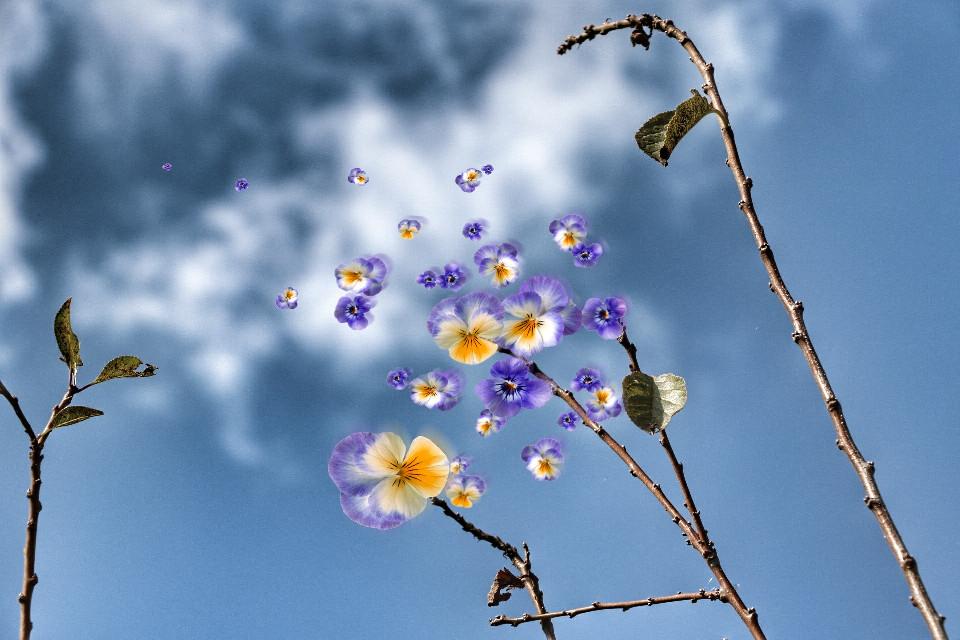 Happy Easter 🌸       #sky #blue #flowers #playwithpicsart #edited #springtime