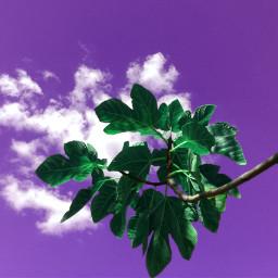 colorful nature sky playwithpicsart green