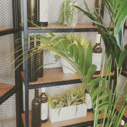 freetoedit nature plants inside indoorplants pcgreen