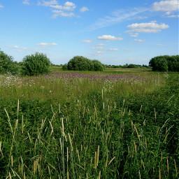 freetoedit grass naturephotography pcgreen poland