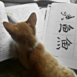 remixit cat book studylanguage studytime freetoedit